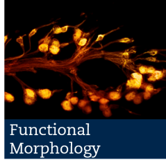 functional morphology