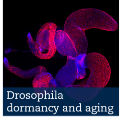 dormancy and aging
